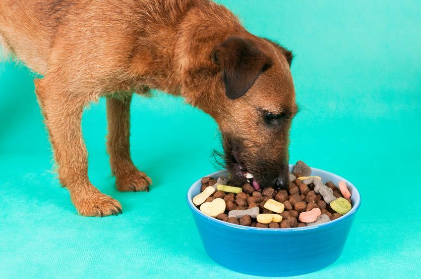 Pies przy misce z karmą, a także karma Wiejska Zagroda jej skład, dawkowanie, rodzaje i cena