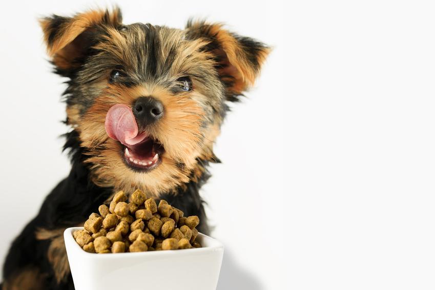 Pies jedzący karmę, a także karma Wiejska Zagroda, informacje, cena, rodzaje i właściwości