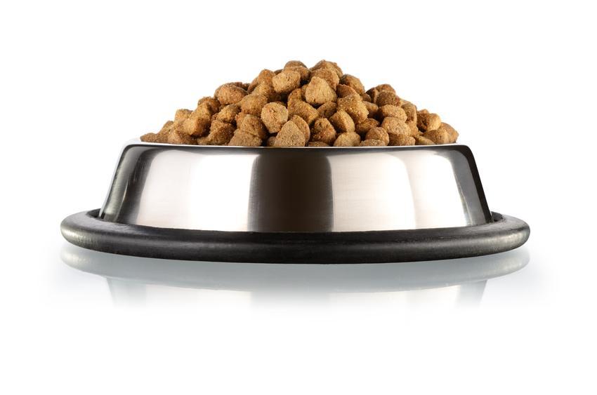Miska z karmą dla psa, a także sucha karma dla psa, informacje, cena, rodzaje i właściwości