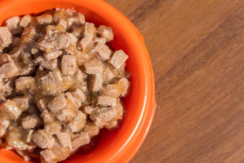 Karma Chappi mokra dla psów dorosłych i szczeniąt w misce oraz jej dokładny skład i wartości odżywcze.