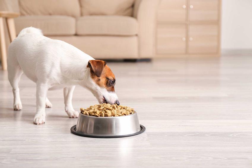 Karma Acana w misce, jedzona przez psa z brązową łatą na oku, a także wartości odżywcze oraz skład karmy.