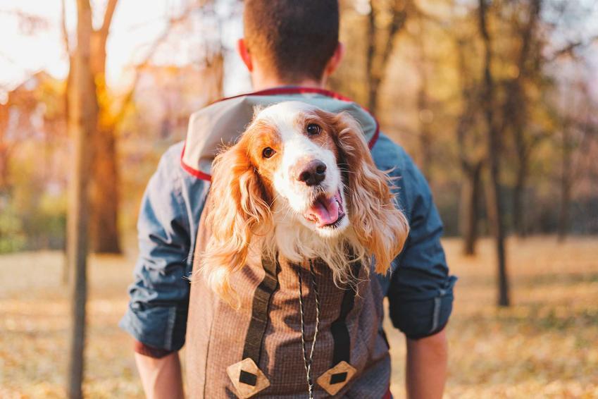 Plecak dla psa, czyli transporter do przenoszenia psa na plecach oraz wymiary i zastosowanie.