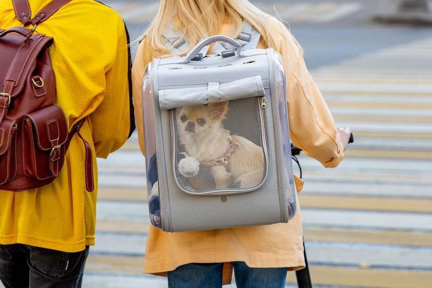 Transporter plecak dla psa z małym pieskiem w środku oraz zastosowanie i wybór najlepszego plecaka.