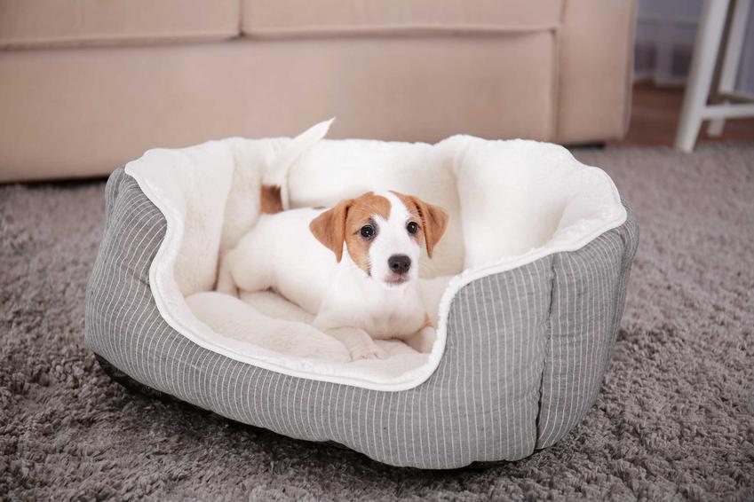 Kanapa dla psa z psem, a także zastosowanie, jakość kanapy, ceny oraz opinie o najlepszych modelach.