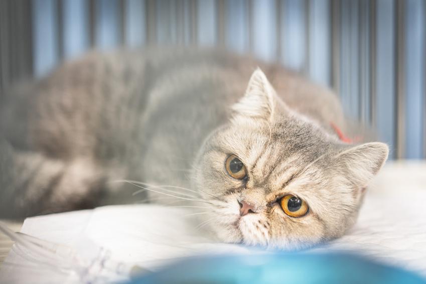 Kot oraz polecane tabletki na robaki, czyli zalecane leki na odrobaczenie kota
