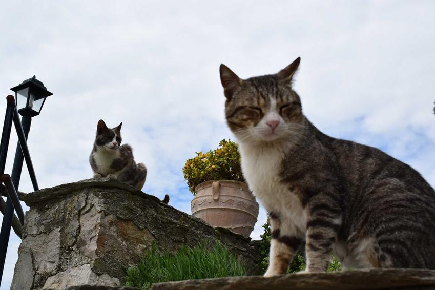 Koty dachowce siedzące na murku, a także informacje, ile żyją koty dachowe