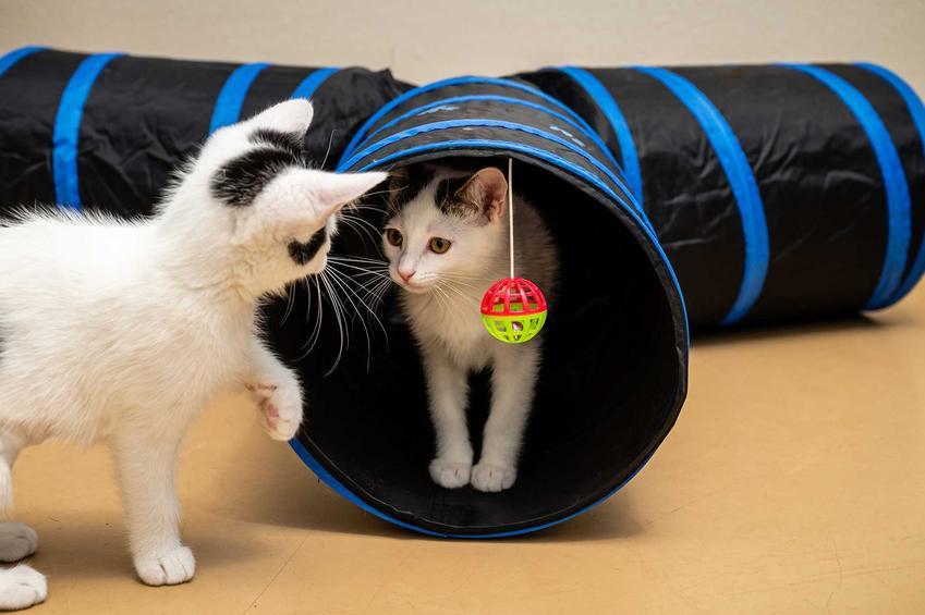 Tunel dla kota dla małych kociąt, a także informacje o tunelach dla kotów do zabawy