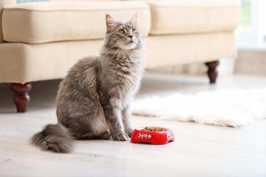 Kot przy misce z karmą, a także karma Arion dla psa i dla kota, jej opis, cena i skład