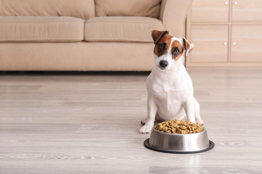 Pies przy misce z karmą, a także karma Purina Beyond dla psa i dla kota, jej skład i opis