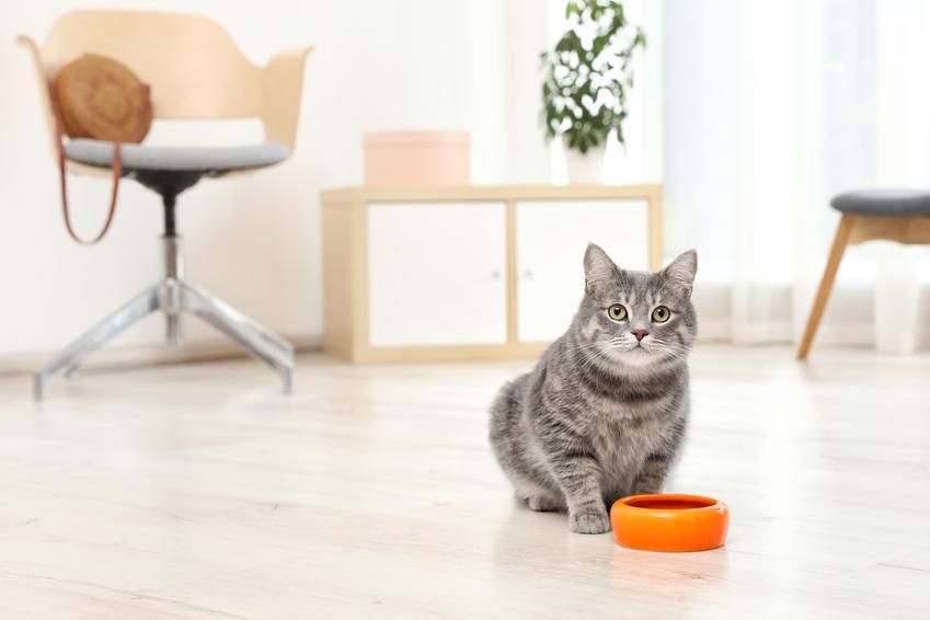 Kot przy misce z karmą, a także karma Bozita dla psa i dla kota, jej opis, cena i skład