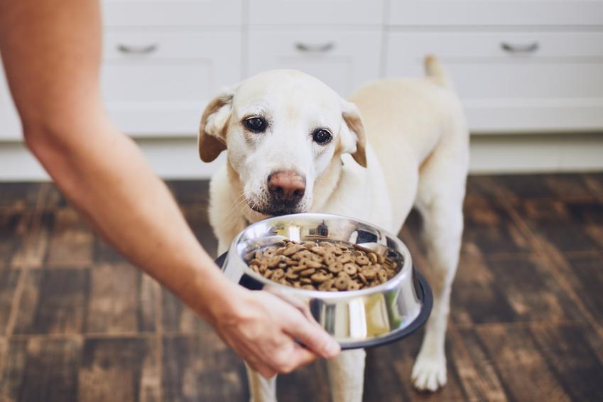 Pies przy misce z karmą, a także karma Bozita dla psa i dla kota, jej skład i opis