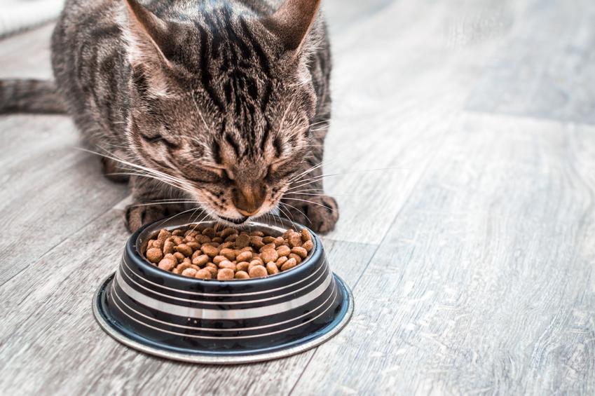 Kot przy misce z karmą, a także karma Perfect Fit dla psa i dla kota, jej opis, cena i skład