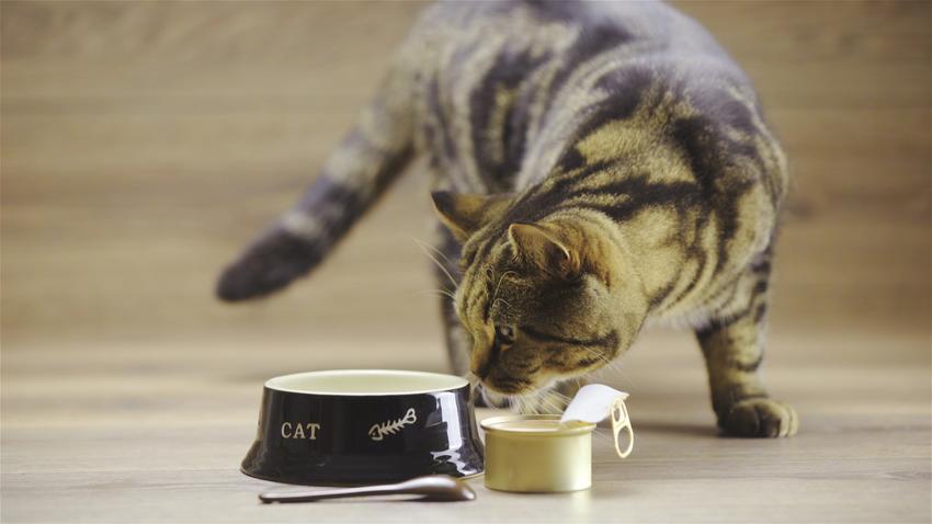 Kot przy misce z karmą, a także polecana mokra karma dla kota, cena i porady