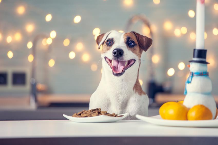 Pies przy misce z karmą przy stole, a także karma dla psa i dla kota Empire, jej rodzaje i dawkowanie