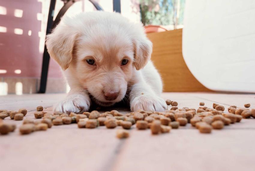 Sucha karma dla psów Purina Dog Chow i szczeniak jedzący posiłek, a także ceny, skład i rodzaje