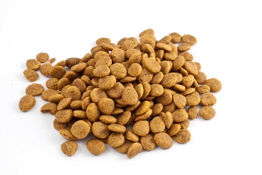 Sucha karma dla psa Husse dla szczeniąt wysypana na podłogę, a także wartości odżywcze i inne rodzaje karmy