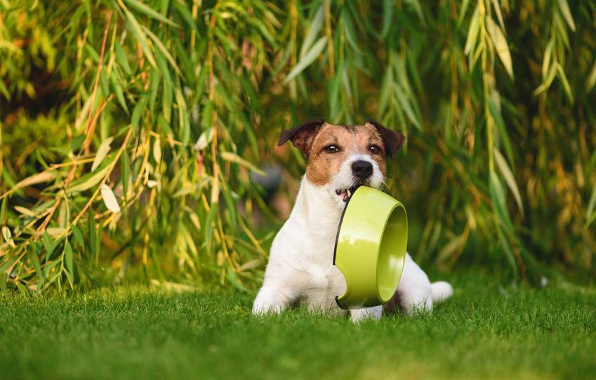 Pies z miską w pysku marzący o karmie Hills, a także rodzaje karmy, jej wartości odżywcze i ceny