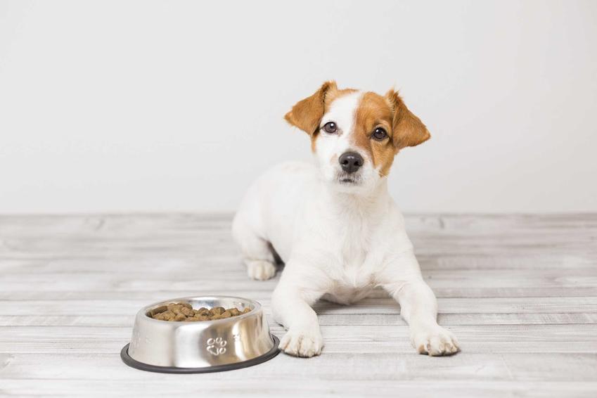Karma Hills dla dorosłego psa oraz pies z brązową łatką, a także wartości odżywcze karmy, jej rodzaje oraz ceny