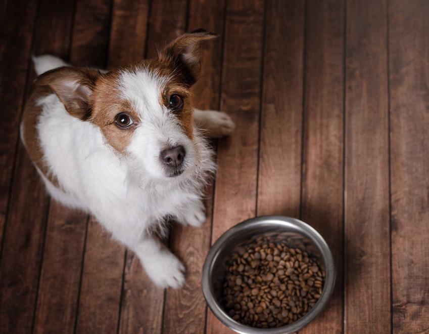 Karma hypoalergiczna dla psa w misce, a także niewielki piesek siedzacy na podłodze oraz skład, wartości odżywcze oraz działanie