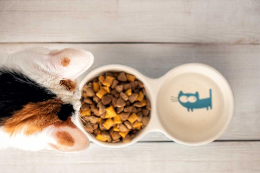 Sucha karma dla kota w podwójnej misce dla kota, a także porady i informacje dotyczące składu, zastosowania i jakości