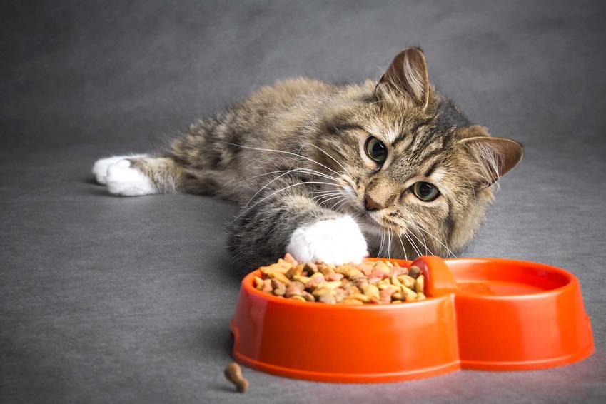 Karma Applaw dla kotów w podwójnej misce i szary kot z białą łapką, a także informacje o rodzajach i składzie karmy