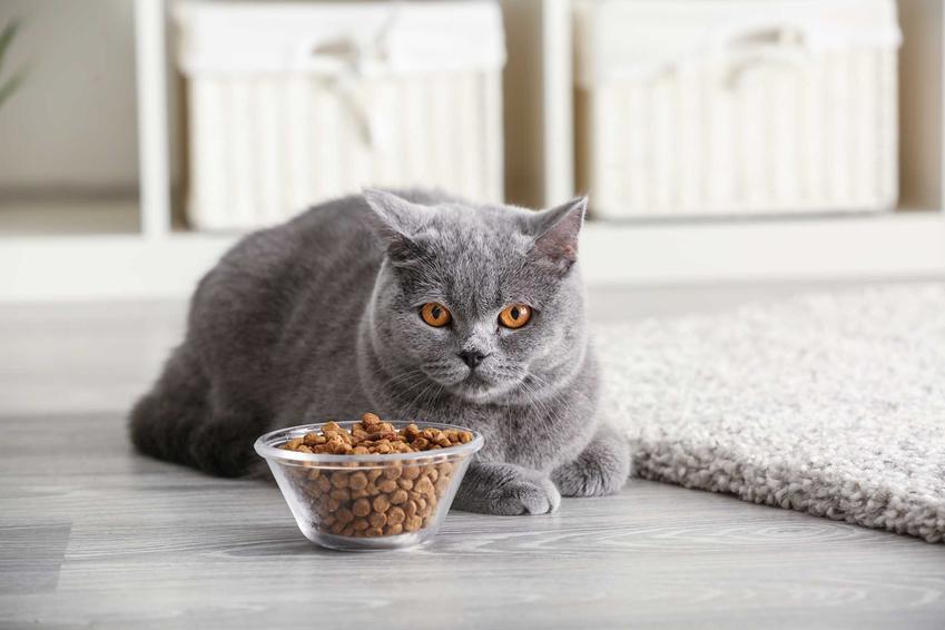 Karma Granatapet w miseczce oraz jedzący kot na podłodze, a także opinie, ceny oraz skład i wartości odżywcze