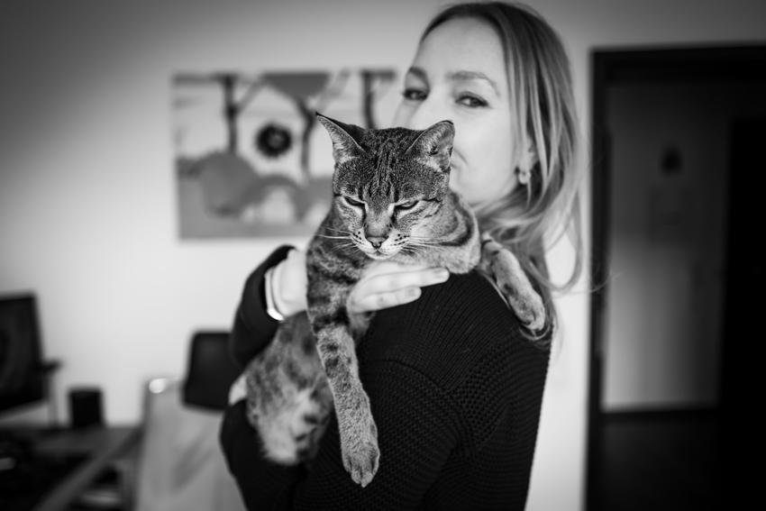 Kot Ashera na rękach u właścicielki, a także cena kota ashera, polecana hodowla i opis