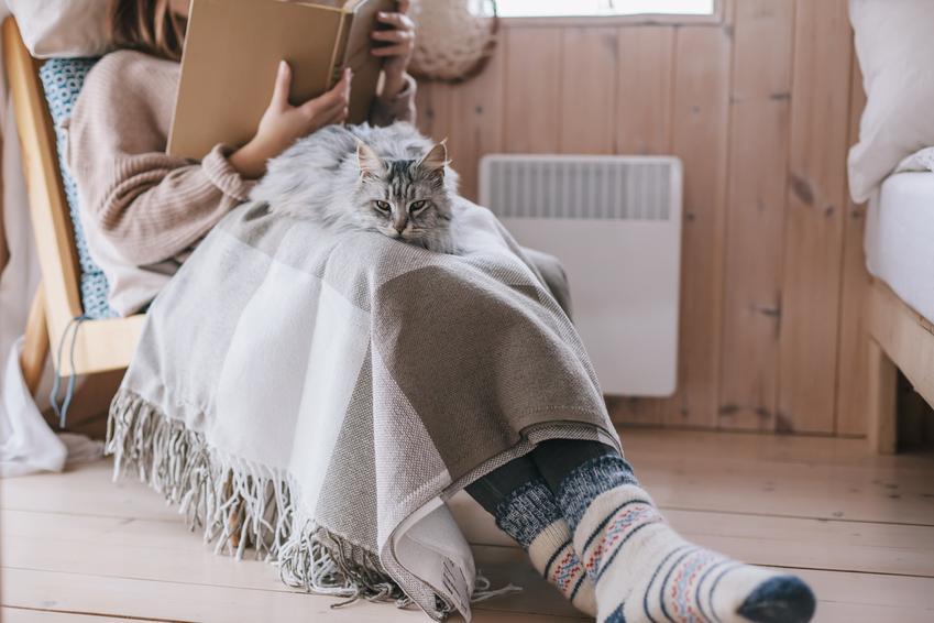 Adooptowany kot na kolanach właścicielki, a także koty do adopcji i adopcja kota