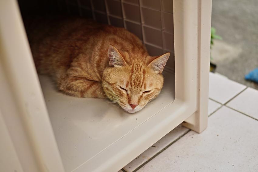 Kot do adopcji śpiący w boxie, a także koty do adopcji i adopcja kota krok po kroku