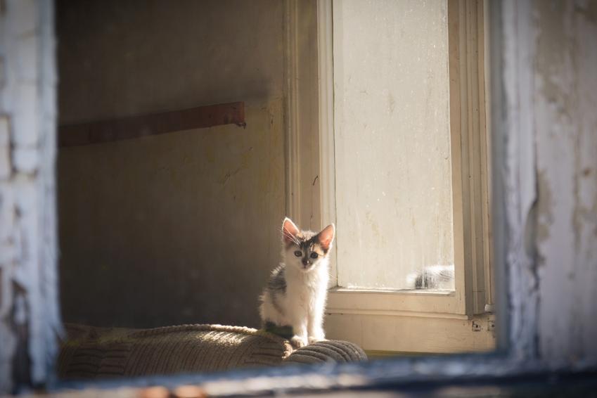 Samotny kot w opuszczonym domu, a także koty do adopcji, adopcja kota i porcedury
