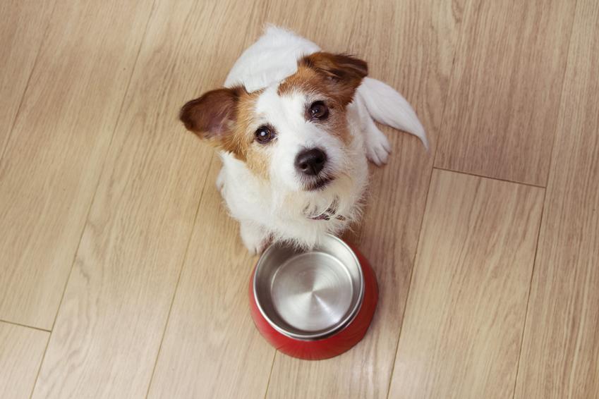 Jak karmić psa? Zasady układania diety