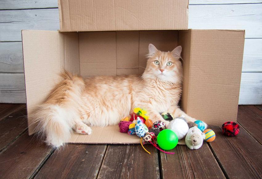 Beżowy kot leżący w kartonie i bawiący się drobnymi zabawkami, a także inne zabawki, zastosowanie, potrzeby kotów oraz opinie