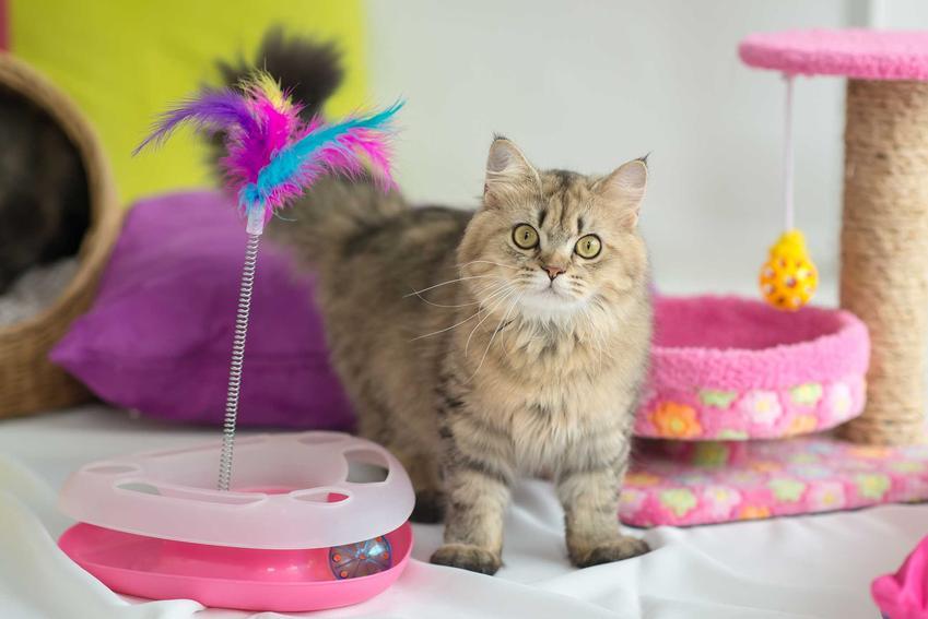 Mały kot bawiązy się zabawką z piórkiem, a także opis innych zabawek, opinie i zastosowanie
