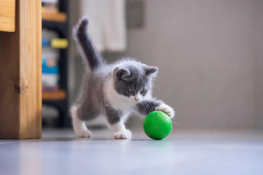 Czarny kot bawiący się zieloną zabawką, a także inne zabawki dla małych kotów, ich zastosowanie i opinie