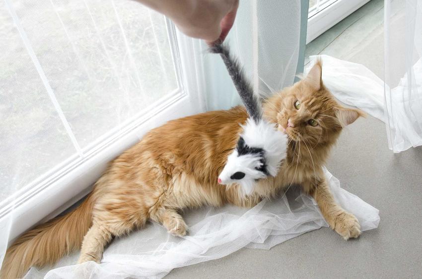 Kot bawiący się z właścicielem pluszową myszką na patyku, a także inne zabawy oraz porady i opinie