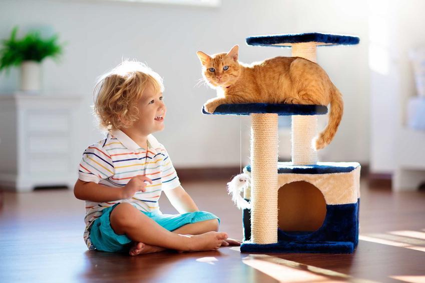 Kot bawiący się z dzieckiem i siedzący na zamku dla kotów, a także inne zabawy dla dużych kotów krok po kroku