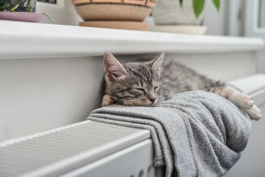 Śpiący na kaloryferze pod oknem kot i opis najspokojniejszych ras kotów, które sprawdzają się do mieszkania, a także dokładny opis i opinie