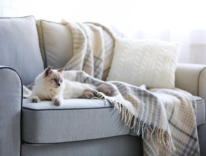 Kot leżący na kanapie w mieszkaniu w bloku, a także opisy i usposobienie innych ras nadających się do mieszkania