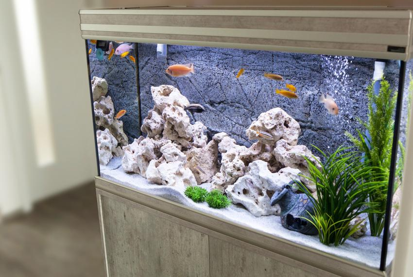 Akwarium z rybkami oraz porady jakie rybki do akwarium dla początkujących