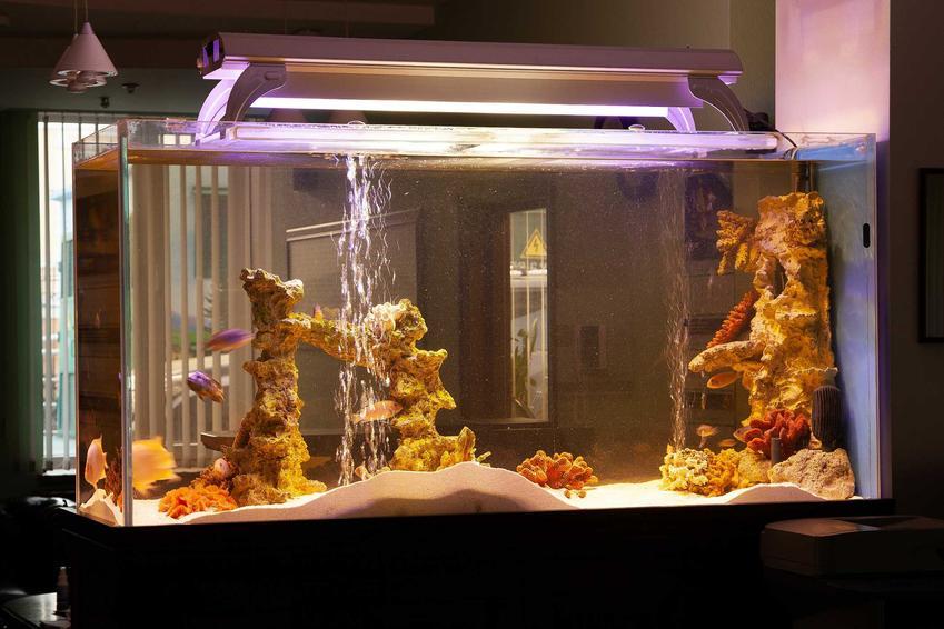 Oświetlenie w akwarium z rybami, a także sposoby i rodzaje oświetlenia, montaż krok po kroku i opinie