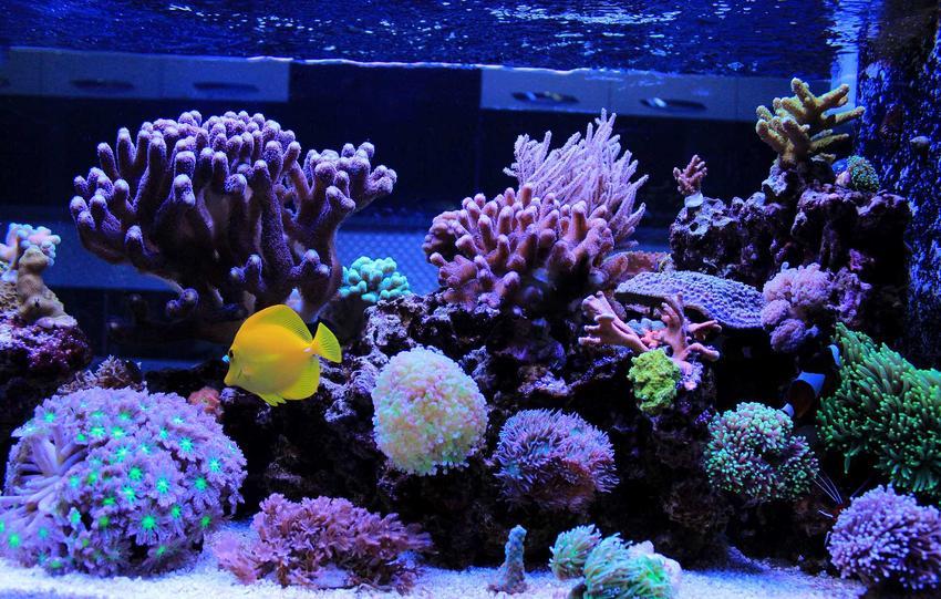 Oświetlenie lampami LED w dużym akwarium, a także zastosowanie lamp, rodzaje, opinie i montaż
