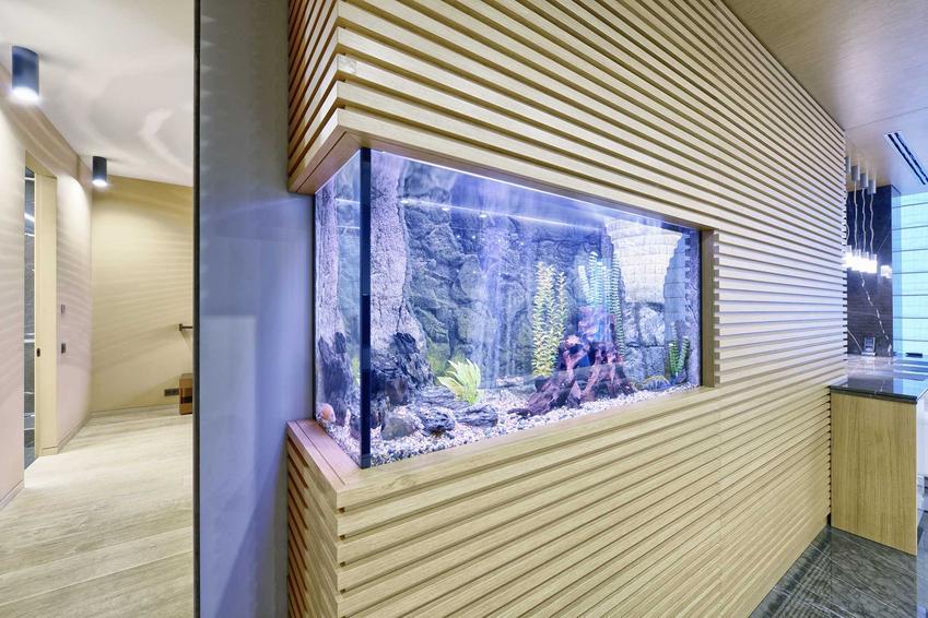 Aranżacja akwarium w salonie wbudwanego w ścianie, a takze sposoby, porady oraz wybór akcesoriów