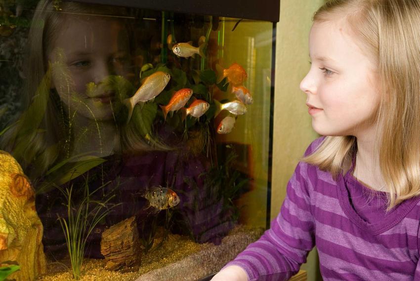 Aranżacja akwarium i przygotowanie akwarium przez małą dziewczynkę, a także porady, akcesoria dla ryb
