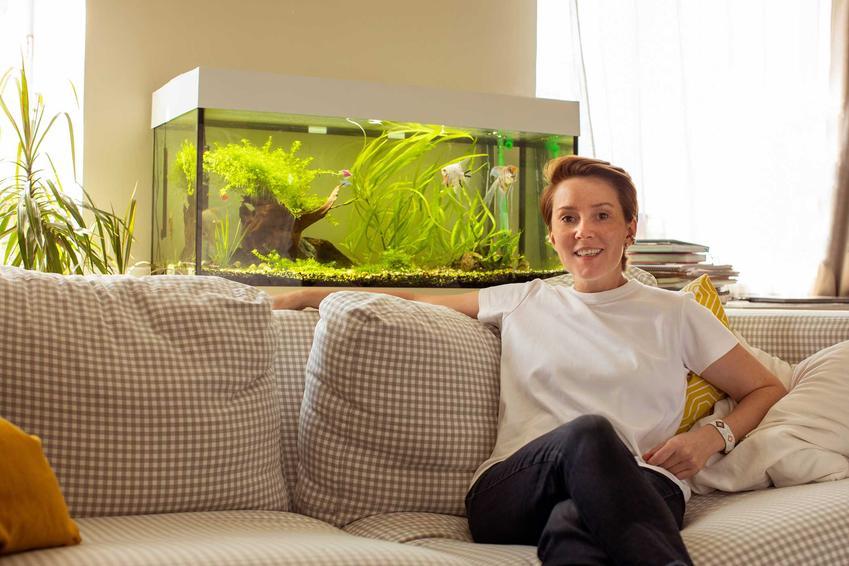 Akwarium na wymiar w salonie za kanapą, a także czy warto zamówić akwarium na wymiar oraz najlepsze porady