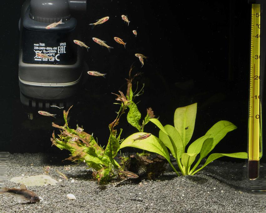 Filtr kubełkowy w akwarium z gupikami i roślinkami, a także porady, zastosowanie, opis działania oraz opinie