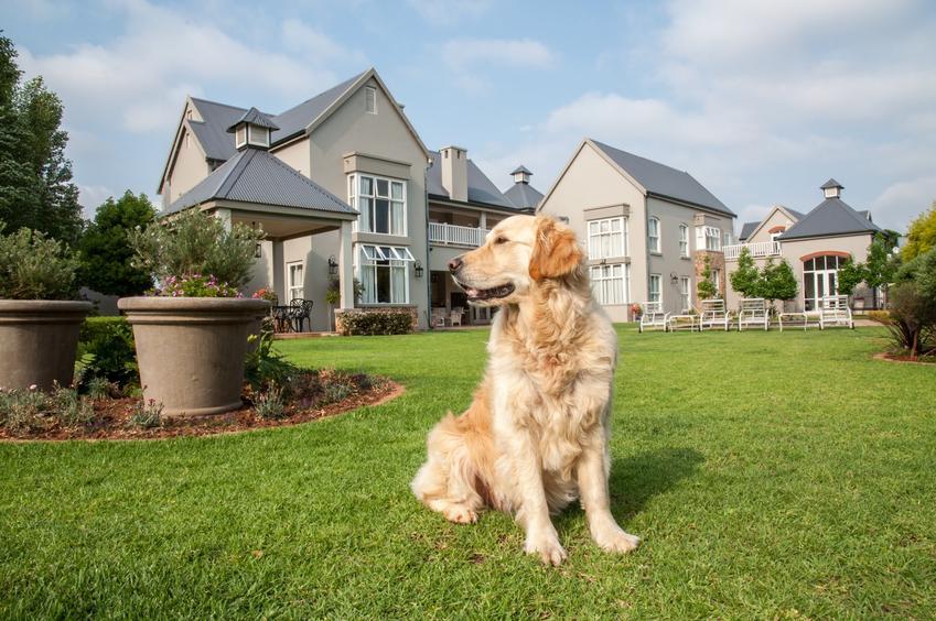 Pies na podwórku bez ogrodzenia, a także elektryczny pastuch dla psa i jego zastosowanie