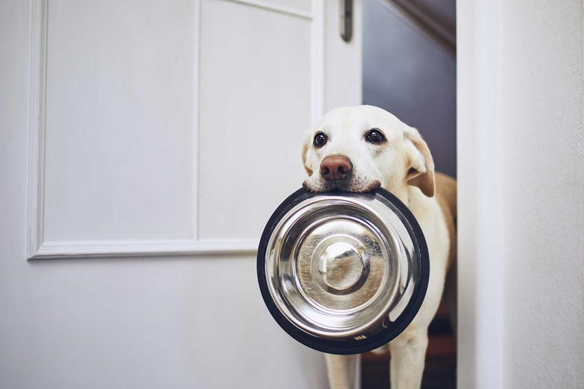 Pies niosący miskę po karmę Purina Pro Plan, a także rodzaje karmy, opic, cena oraz skład i wartości odżywcze