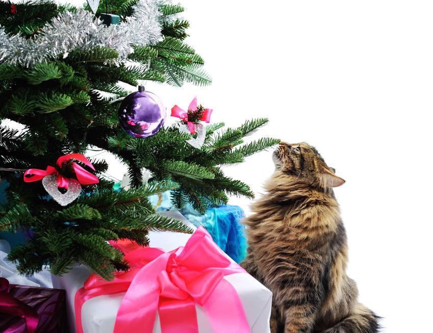 Kot zainteresowany choinką i prezentami, a także jak zabezpieczyć choinkę przed kotem i zwierzętami