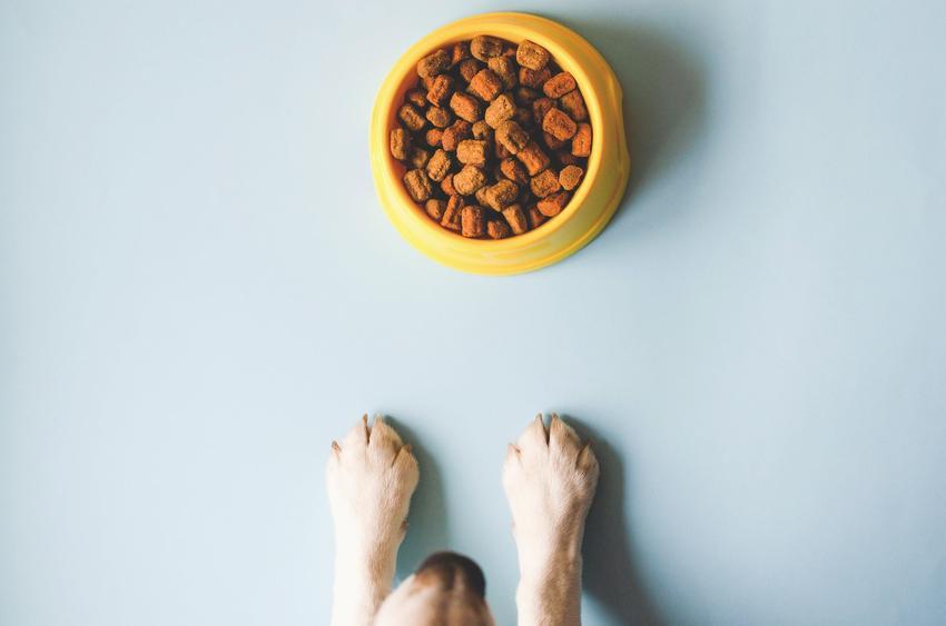 Łapy psa przy misce z karmą, a także karma Brit Premium dla psów, jej skład, właściwości i dawkowanie