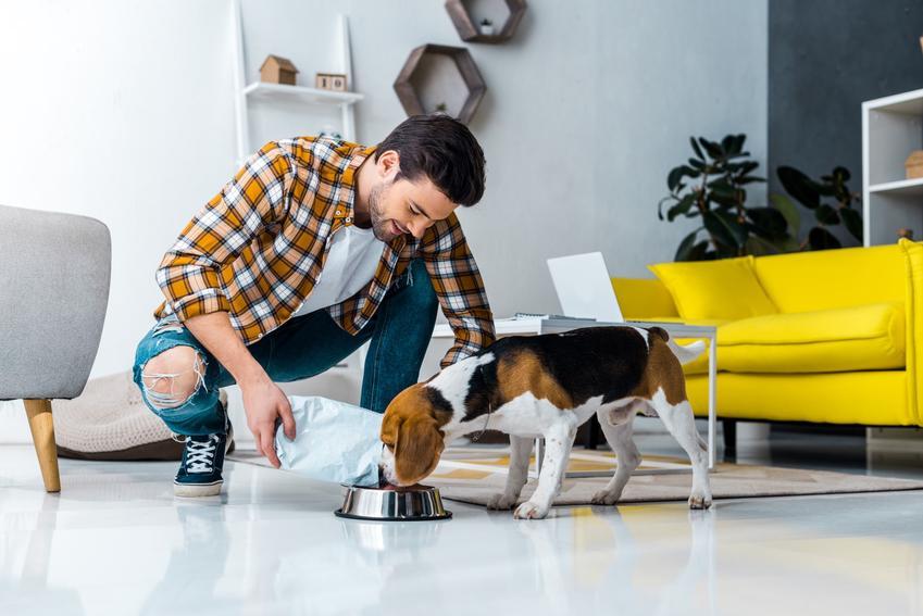 Pies przy misce z karmą, a także karma Brit Premium dla psa, jej rodzaje i dawkowanie
